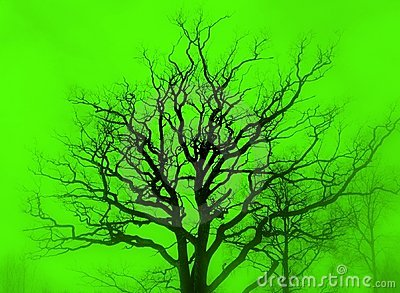 Tree silhouette green