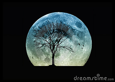 tree silhouette and the moon stock photo image 11177070