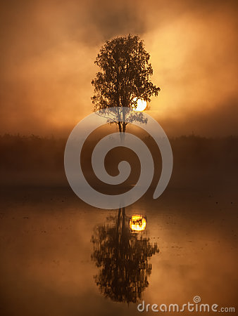 Free Tree Silhouette On A Sunrise. Royalty Free Stock Photos - 30222898
