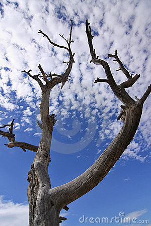 Free Tree Silhouette On Blue Sky Background Stock Photography - 5166412