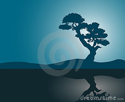 Tree silhouette reflection