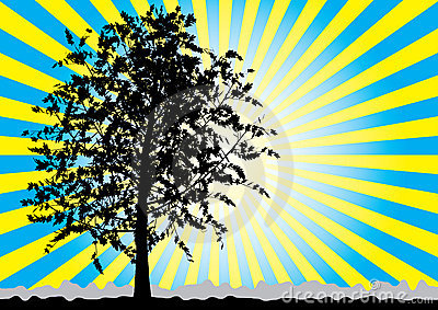 Tree silhouette on sky rays background.