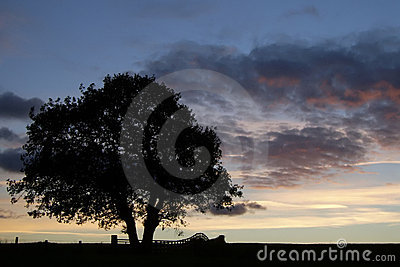 Tree Silhouette At sunset 1