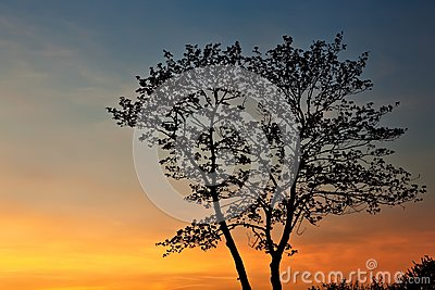 Tree silhouette at sunset.