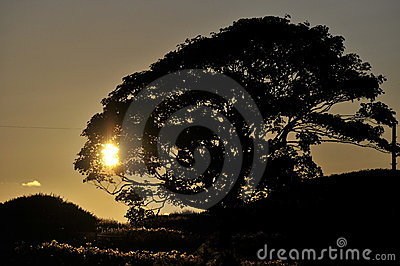 Tree silhouetted at sunset