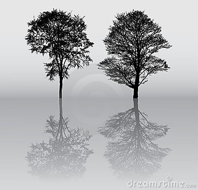 Free Tree Silhouettes Stock Images - 12553624