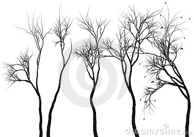 Tree silhouettes,