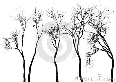 Tree silhouettes,