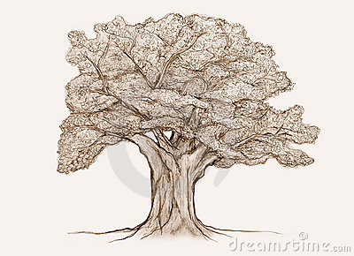 tree sketch royalty free stock images image 16489209