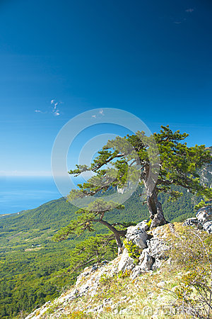 Tree on a slope