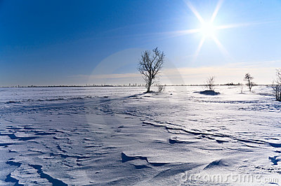 Tree in a snow-covered field