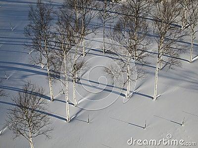 Tree and snow in Hokkaido