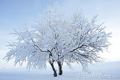 Tree with snow and nice background