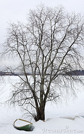 Tree in snowy countryside