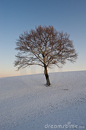 Tree on snowy hillside