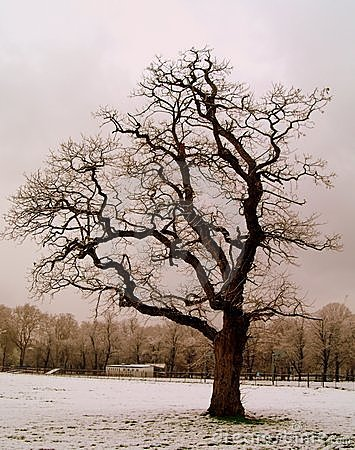 Tree in snowy winter park