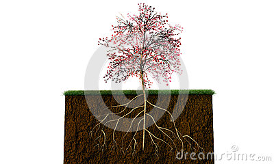 Tree on a soil section
