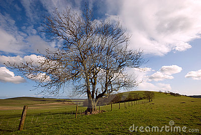 Tree on South Downs