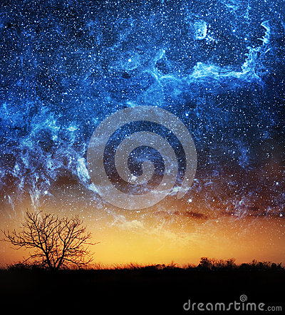 tree and space background