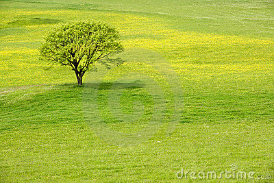 Tree in a spring blossom meadow