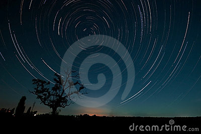 Tree and star trails