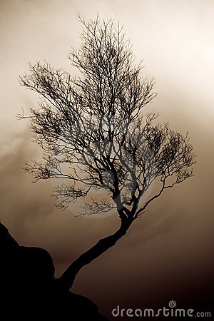 Tree in stormy weather.