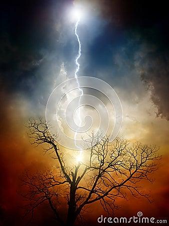 Free Tree Struck By Lightning Stock Photo - 21764900