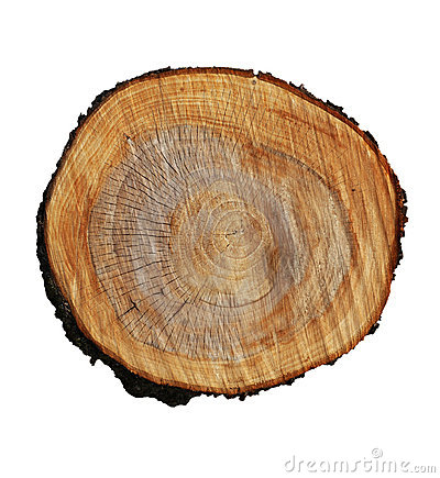 Free Tree Stump Royalty Free Stock Image - 20412076