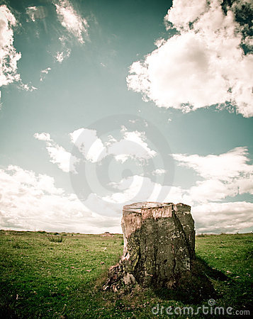 Free Tree Stump Royalty Free Stock Photography - 2774087