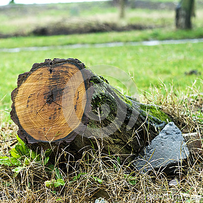 Free Tree Stump Royalty Free Stock Photo - 49925765