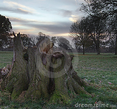 Tree Stump At Dawn