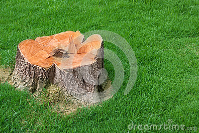 Tree stump and green grass field manage