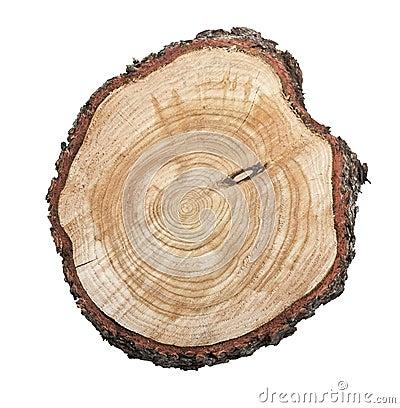 Free Tree Stump Isolated On White Background Royalty Free Stock Image - 15818686