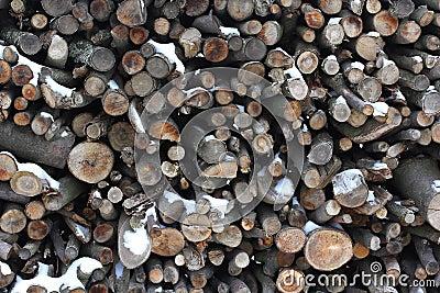 Tree stump background