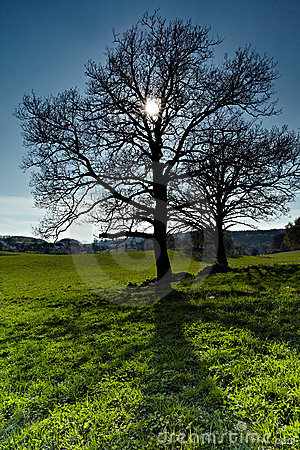 Tree and Sun.