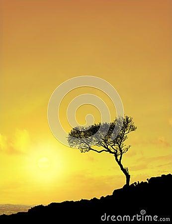 Tree (sun sky)