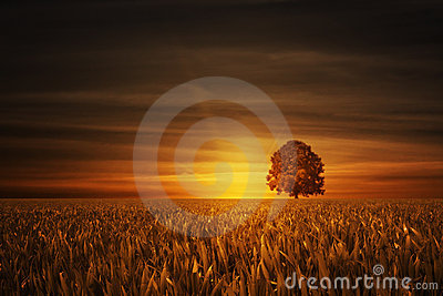 Tree with sundown