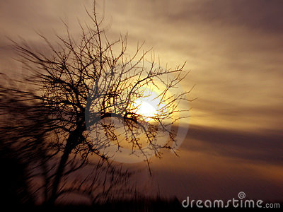 Tree and sundown conceptual image.