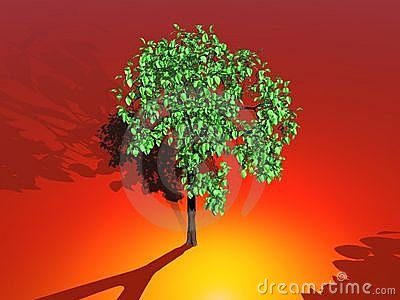 Tree In Sunlight Royalty Free Stock Image - Image: 10170756