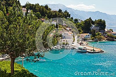 Tree and Sunny Adriatic Bay