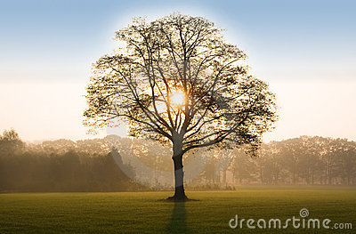 Tree in sunrise with backlit