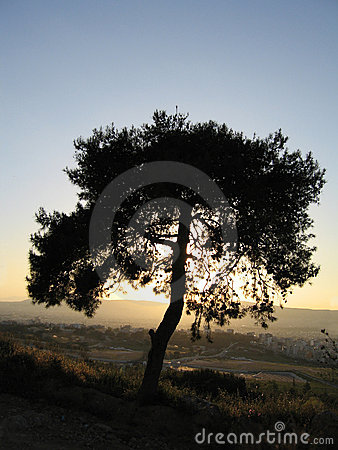 Tree in the sunset