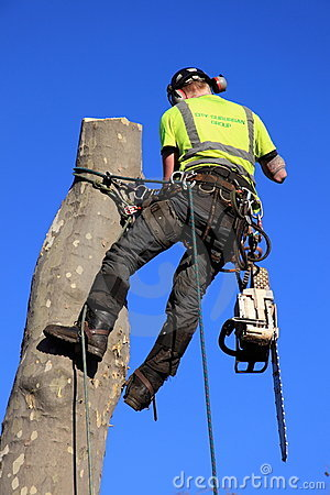 A tree surgeon Editorial Stock Photo