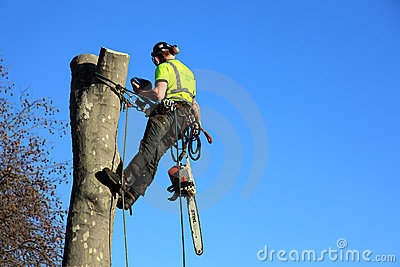 A tree surgeon Editorial Photography
