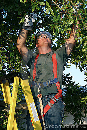Free Tree Surgeon At Work Royalty Free Stock Images - 132369
