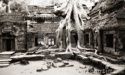 Tree taken possession of Ta Prohm temple walls