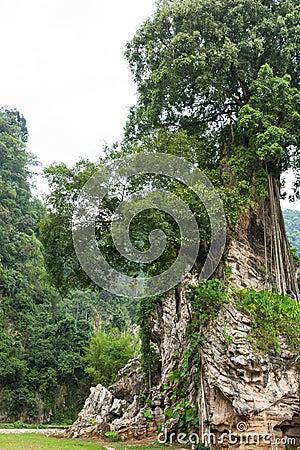 Tree on tiny hill