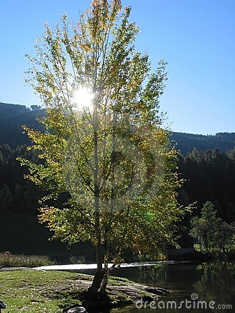 Tree in tirol, austria