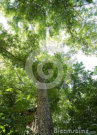 Free Tree Top Stock Photo - 10388230