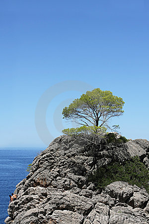 Tree on top of the mountain